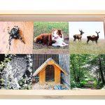 Montessori Sortierspiel Tiere und ihr Zuhause