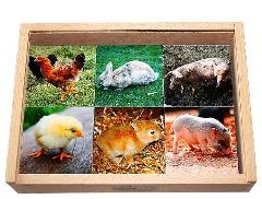 Montessori-Material zum Kennenlernen von Tierkindern und ihren Müttern.